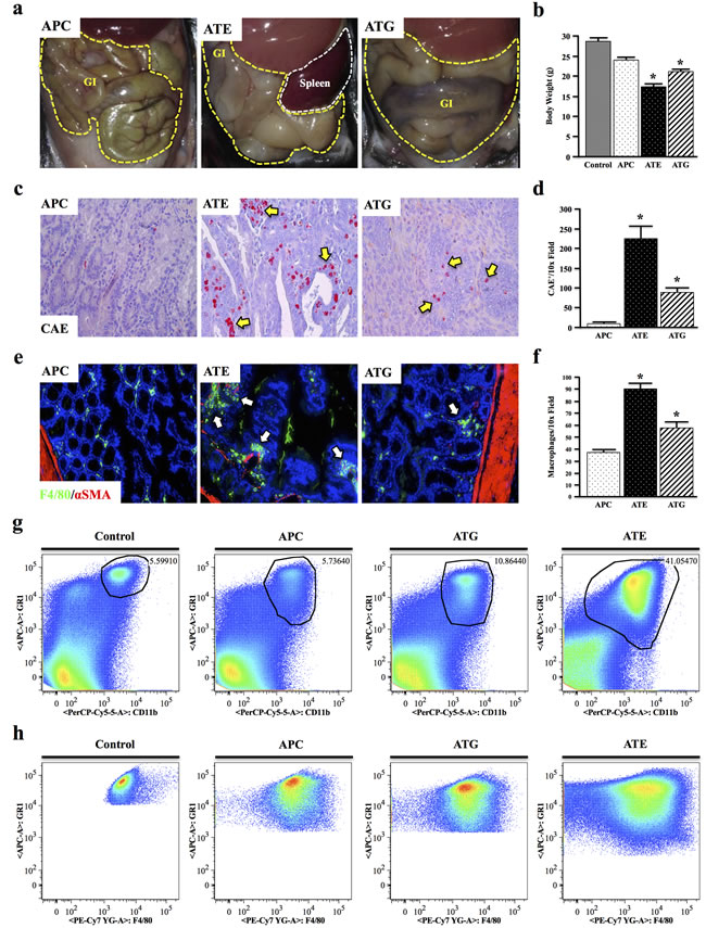 Both Systemic and Epithelial TGFBR-Deficiency Enhance APC-Induced Inflammation.