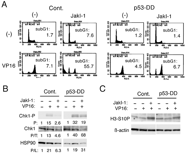 p53 may play a role in inhibition of Chk1-mediated G2/M checkpoint activation by the Jak kinase inhibitor JakI-1 in etoposide-treated cells.