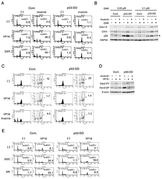 p53 may play a role in inhibition of Chk1-mediated G2/M checkpoint activation by imatinib in BCR/ABL-expressing cells treated with chemotherapeutics.