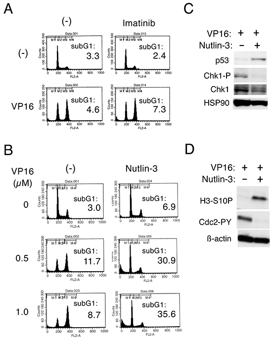 Nutlin-3 down regulates Chk1-mediated G2/M checkpoint activation to induce apoptosis synergistically with etoposide in cells transformed by the T315I mutant of BCR/ABL.
