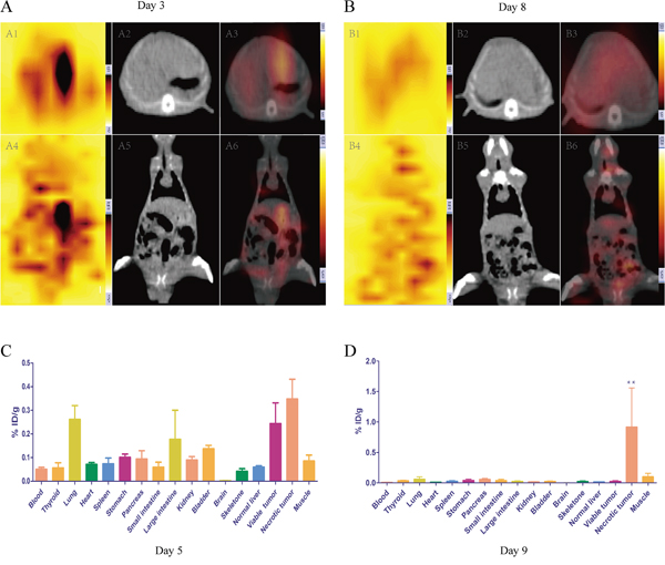 In vivo SPECT-CT A, B. and post mortem γ counting C, D. for rats receiving i.v. injection 131I-Hyp at different time point.