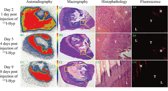 Dynamic in vitro autoradiography, fluorescence microscopy and corresponding histopathology results.