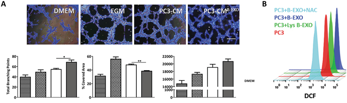 BMSCs-derived exosomes increase tumor angiogenesis in vitro.