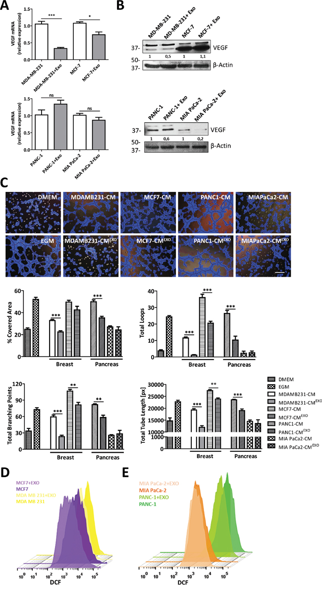 MenSCs-derived exosomes inhibition of tumor angiogenesis is cancer cell-type dependent.
