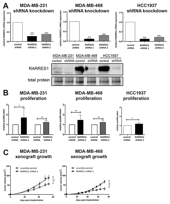 Knockdown of RARRES1 increases in vitro and in vivo cell growth.