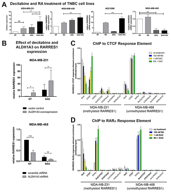 RARRES1 expression is influenced by DNA methylation and retinoic acid signaling.