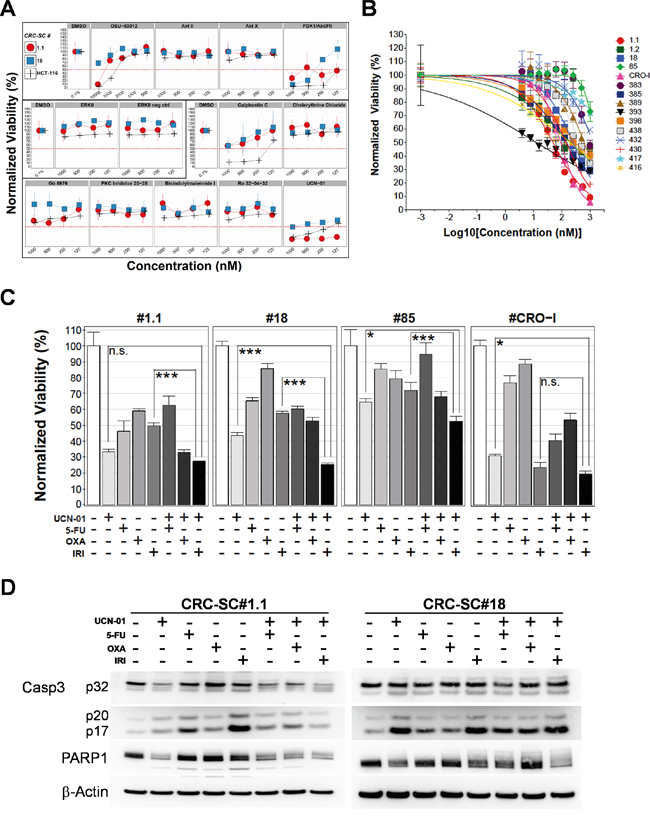 Treatment of CRC-SCs with drug analogues of positive hits identifies UCN-01 as an anti-CSC agent that enhances the effects of chemotherapy in vitro.