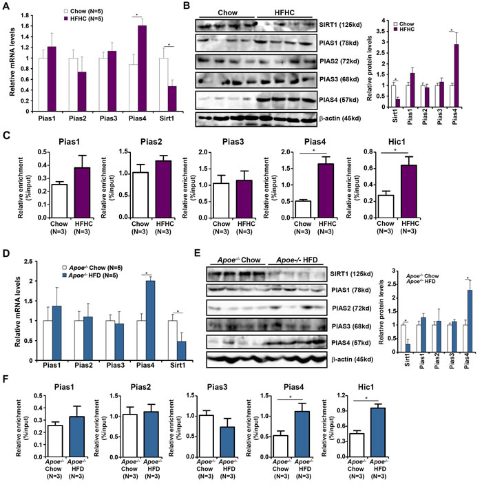 Increased PIAS4 expression accompanies repression of SIRT1