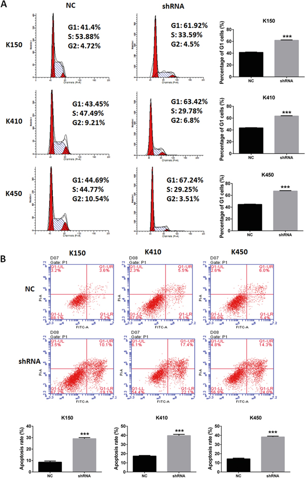Silencing DNMT1 induced G1 arrest and apoptosis in ESCC cells.
