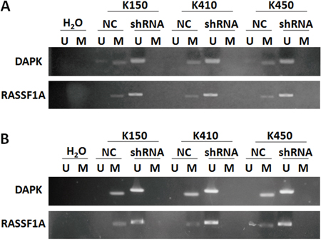 Silencing DNMT1 suppressed methylation in promoter of RASSF1A and DAPK.