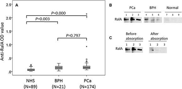 Detection of autoantibodies against RalA in human sera by ELISA and Western blotting analysis.