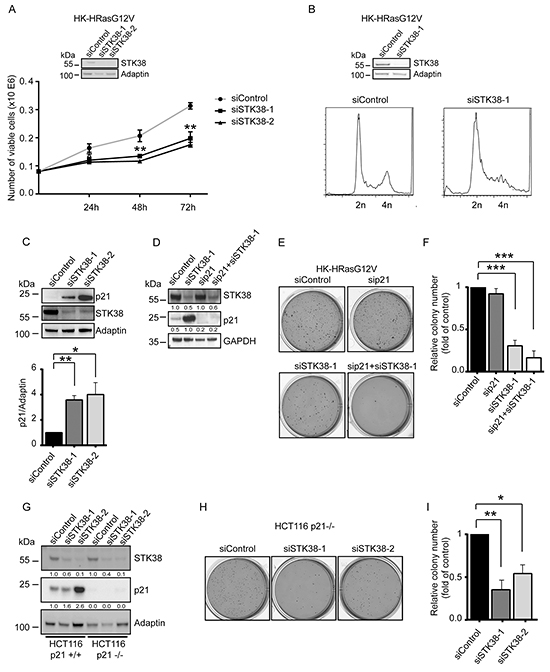 p21 upregulation in STK38-depleted Ras-transformed cells does not suppress anchorage-independent growth.