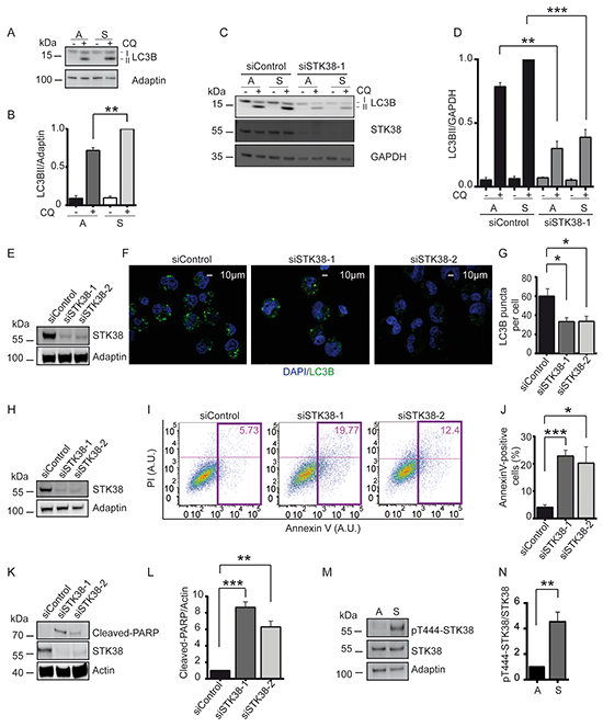 STK38 supports detachment-induced autophagy and anoikis resistance.