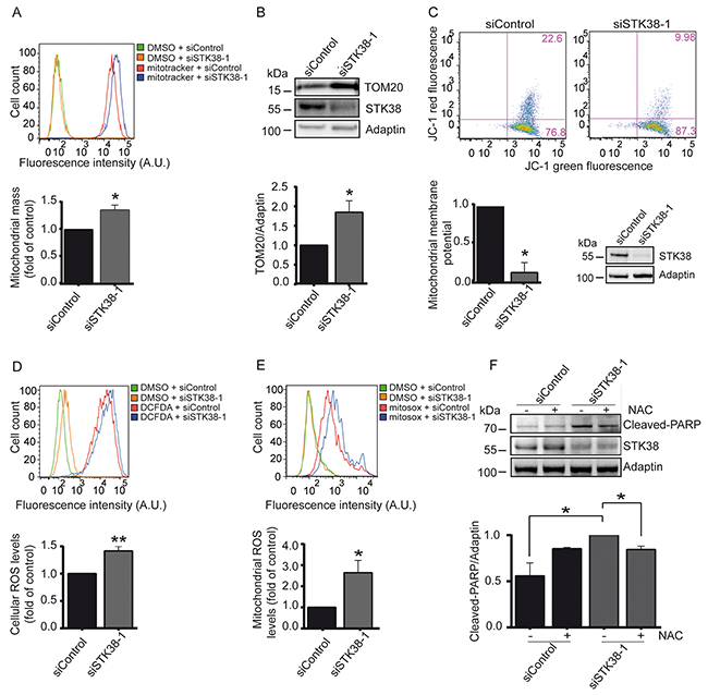 STK38 supports the clearance of damaged mitochondria to prevent ROS-mediated anoikis in detached Ras-transformed human cells.