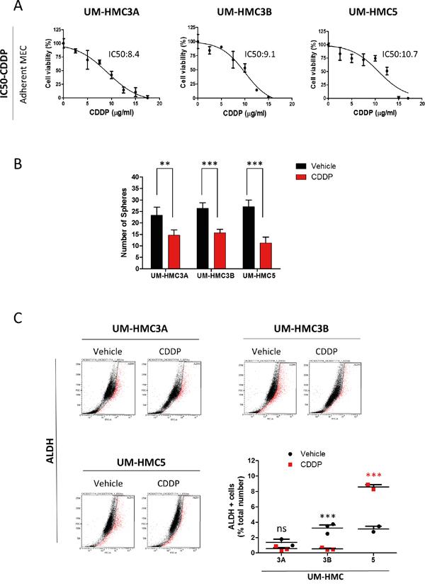 MEC tumor cell lines respond differentially to Cisplatin.