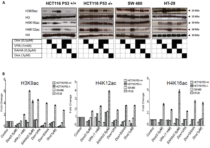 Dox combined with SAHA or VPA triggers induces histone hypo-acetylation.