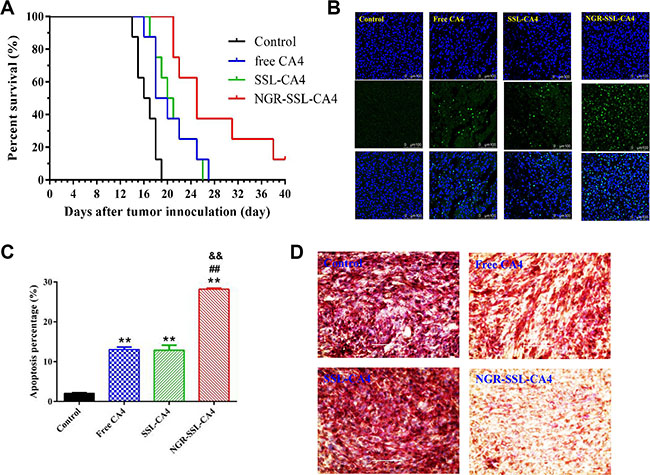In vivo anti-tumor activity of NGR-SSL-CA4 in U87-MG orthotopic glioma tumor-bearing nude mice.
