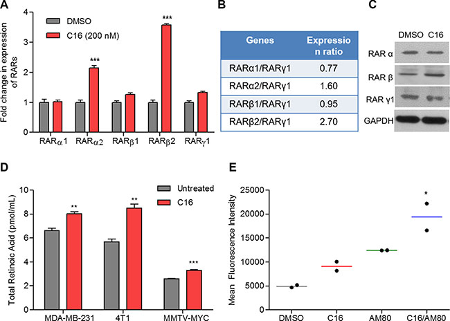 C16 modulates expression of RARs and enhances the retinoid signaling in combination with AM80.