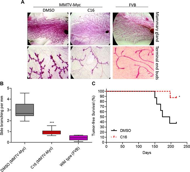 C16 prevents development of Myc-driven mammary hyperplasia.