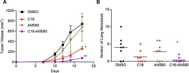 C16 in combination with AM580 inhibits primary tumor growth and lung metastases.