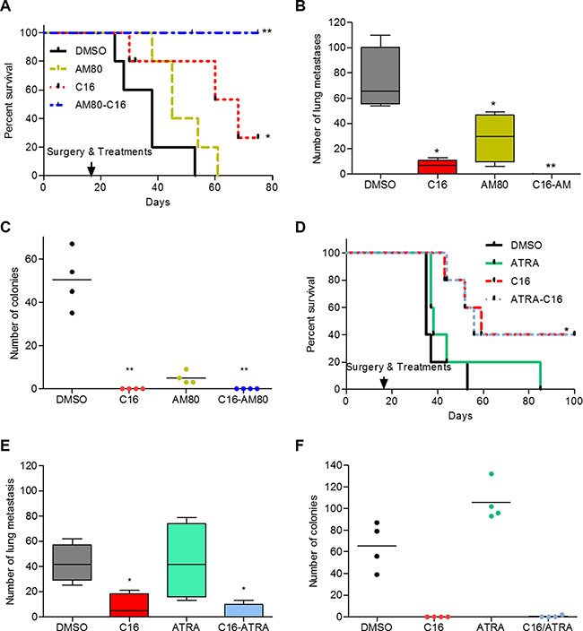 Adjuvant treatment with C16-AM80 combination inhibits metastatic dissemination and increases disease-free survival.