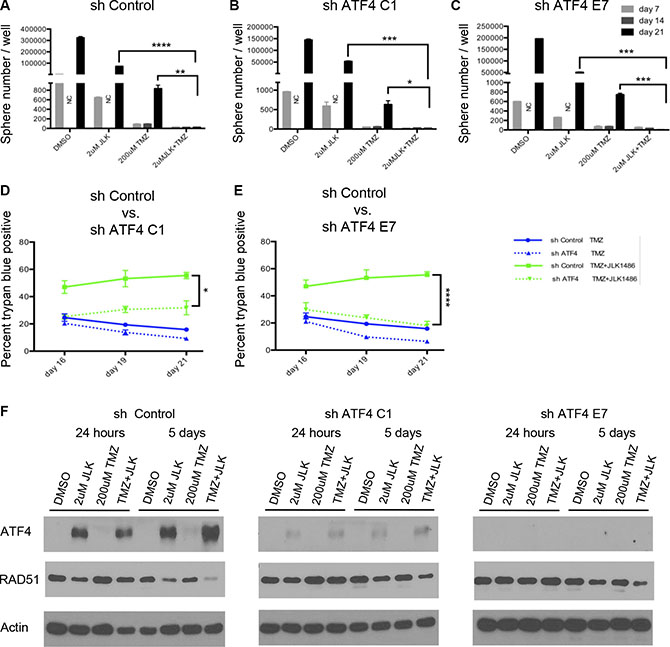 Knockdown of ATF4 does not rescue secondary sphere formation but does decrease cell death in TMZ+JLK1486 treated cells.