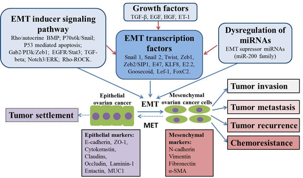 Putative mechanisms of EMT in ovarian cancer chemoresistance and progression.