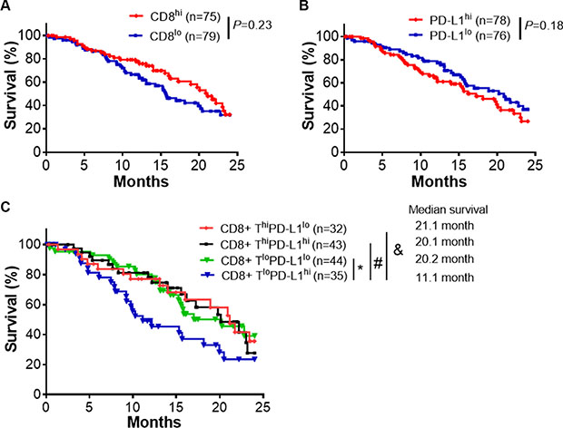 CD8+ T cell infiltrates and PD-L1 expression predict clinical outcomes.