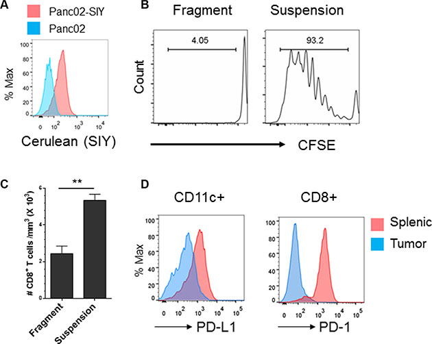Development of an established syngeneic pancreatic tumor model that mimics the CD8+ Tlo PD-L1hi phenotype in pancreatic cancer.