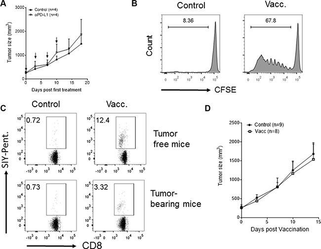PD-L1 blockade- or vaccination-based immunotherapies fail to cause regression of established tumors with the phenotype of low CD8+ T cell infiltrates and high PD-L1 expression.