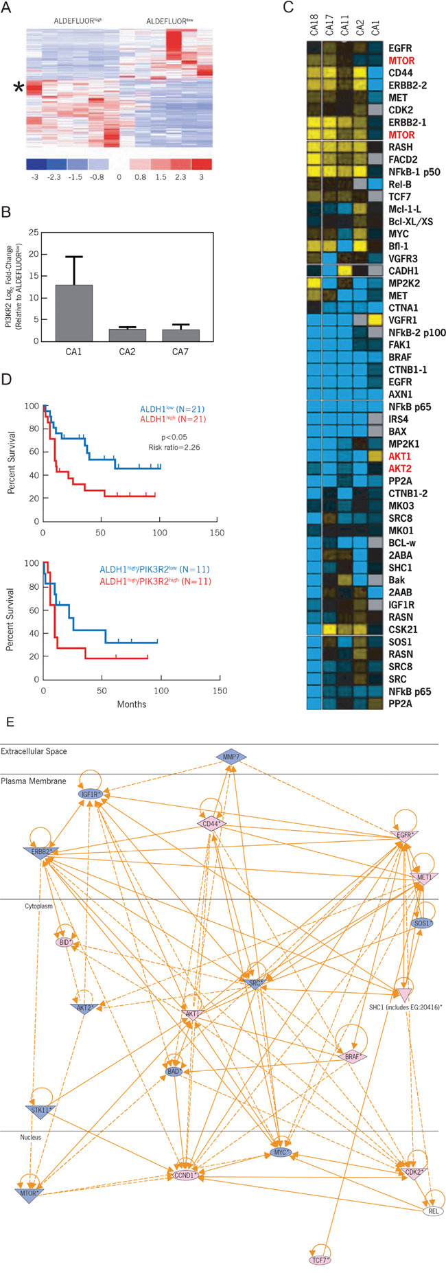 The PI3K/Akt/mTOR pathway is differentially expressed between ALDEFLUORhigh CCSCs and ALDEFLUORlow progenitor cells.