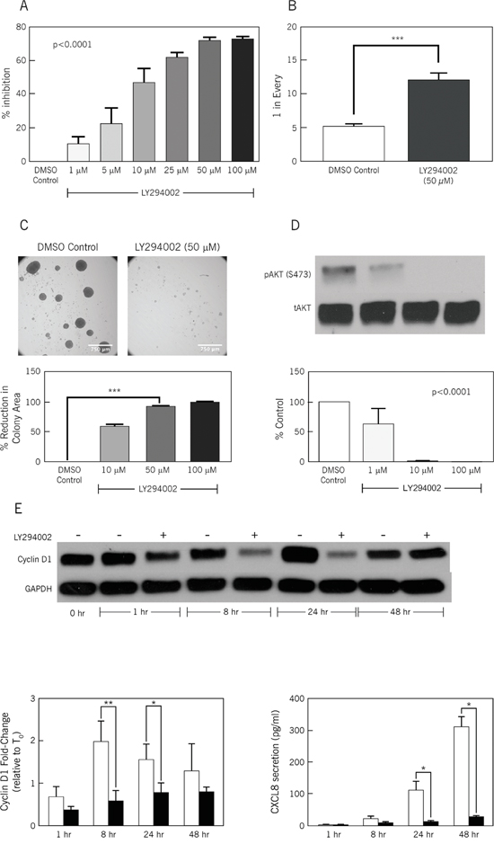 LY294002, a PI3K inhibitor, inhibits stem cell frequency and proliferation.