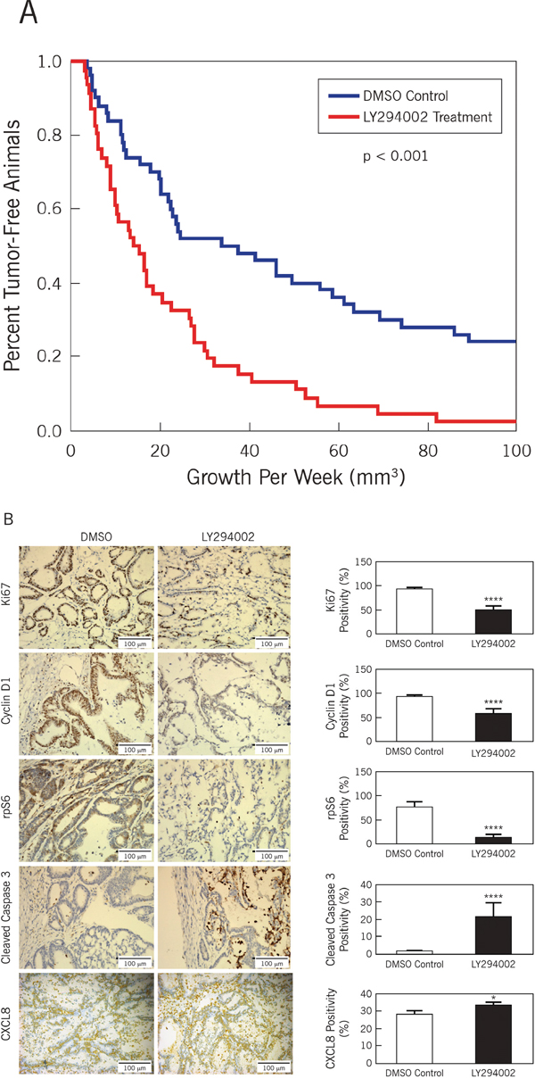 Inhibition of PI3K diminishes growth of CCSCs in vivo.