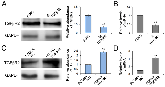 Effects of TGFβR2 silencing and overexpressing in SGC7901 cells.
