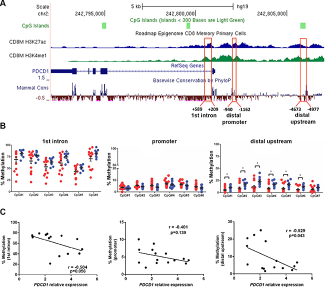 The distal upstream region of PDCD1 is hypomethylated in CD8+ T cells from CLL patients.