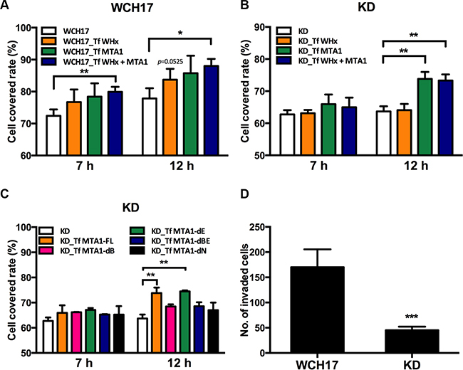Wk-MTA1 enhances cell motility and promotes tumor cell invasiveness.