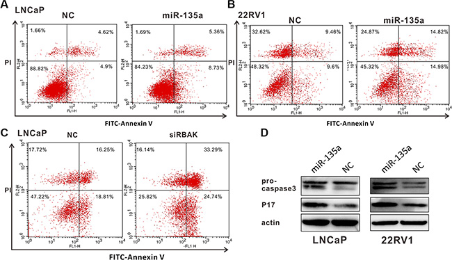 MiR-135a induced apoptosis of PCa cells by targeting and suppressing RBAK.