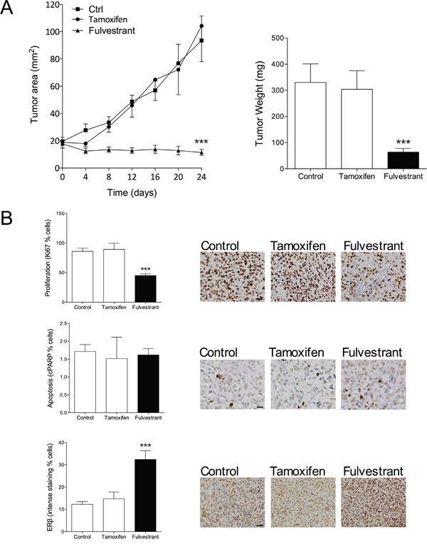 The therapeutic effect of AMF siRNA on KD in nude mice. KD