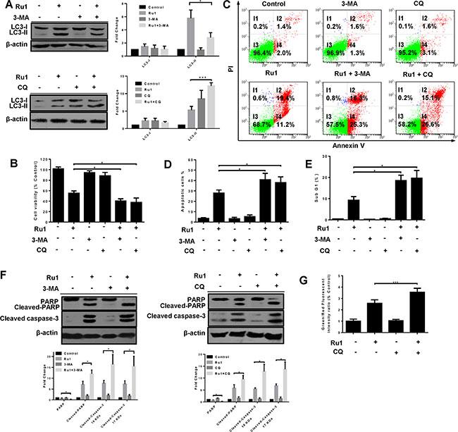 Combining Nelfinavir With Chloroquine Inhibits In Vivo