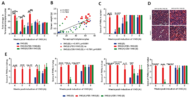 Investigation of tumor-tumor interactions in a double