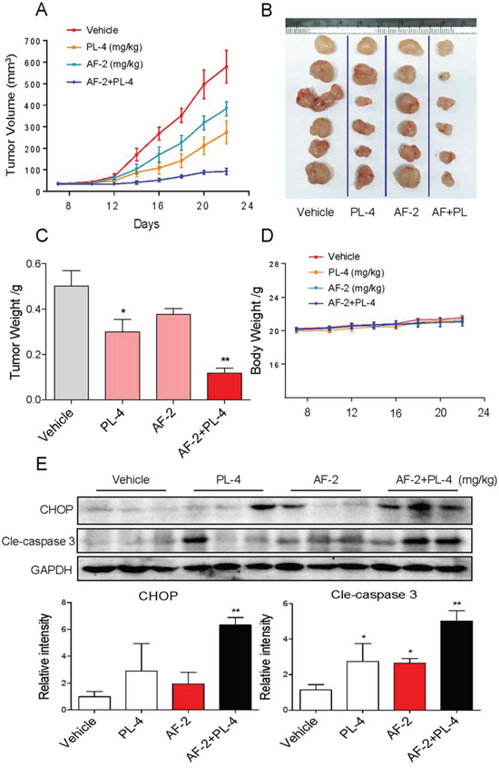 Inhibition of autophagy by CQ significantly enhances the