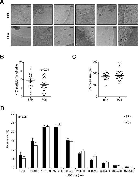 The Effect of pH on the Extracellular Matrix and Biofilms