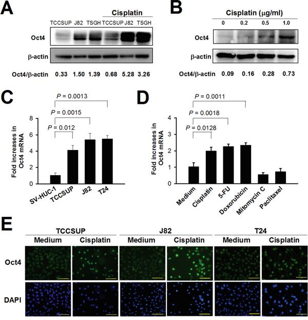 Neurontin weight gain mayo clinic